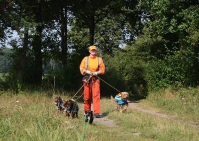 Stoeberhunde